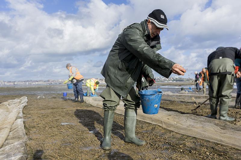 Pesca organiza un curso de cultivo de moluscos para garantizar el futuro del sector marisquero
